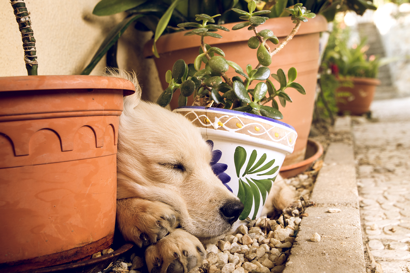 How to Make Your Garden Dog Friendly